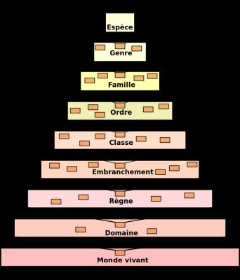 Classification wikipedia