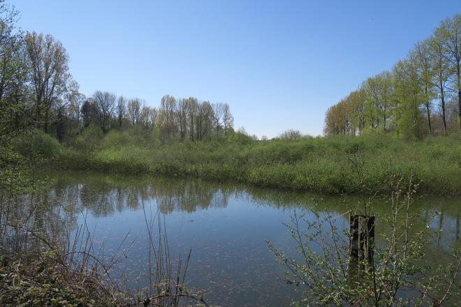 Le deuxième étang avec la nappe d'eau libre