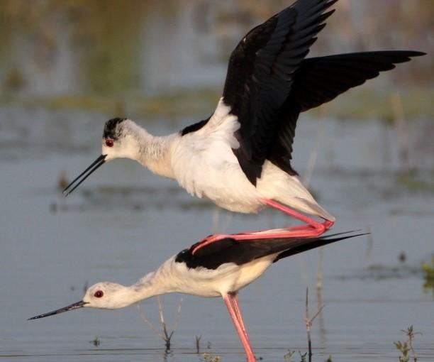 Une espèce tout en hauteur à Nil-Saint-Vincent!