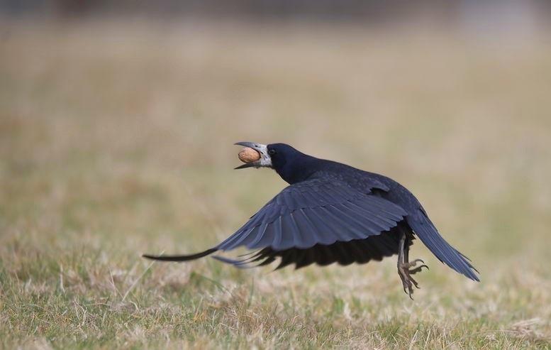 L'intelligence des oiseaux