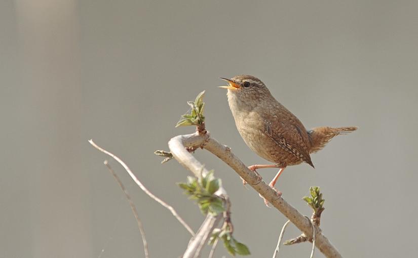 L'intelligence des oiseaux(4)