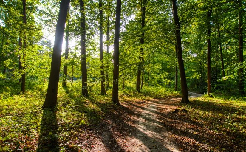 Promenons-nous par les champs et par les bois àBaisy-Thy