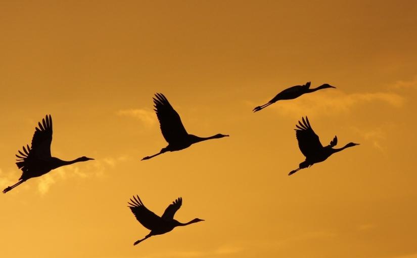 La migration en hautealtitude
