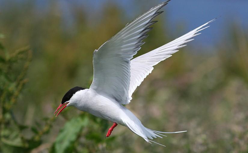 L'intelligence des oiseaux(6)