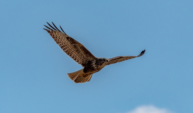 Buse variable D50_3119